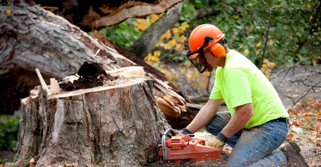 Boynton Beach Tree Trimming and Tree Removal Services Header-We Offer Tree Trimming Services, Tree Removal, Tree Pruning, Tree Cutting, Residential and Commercial Tree Trimming Services, Storm Damage, Emergency Tree Removal, Land Clearing, Tree Companies, Tree Care Service, Stump Grinding, and we're the Best Tree Trimming Company Near You Guaranteed!