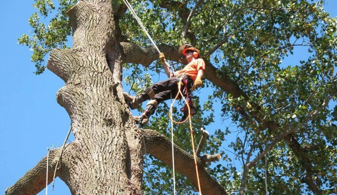 Commercial Tree Services -Boynton Beach Tree Trimming and Tree Removal Services-We Offer Tree Trimming Services, Tree Removal, Tree Pruning, Tree Cutting, Residential and Commercial Tree Trimming Services, Storm Damage, Emergency Tree Removal, Land Clearing, Tree Companies, Tree Care Service, Stump Grinding, and we're the Best Tree Trimming Company Near You Guaranteed!