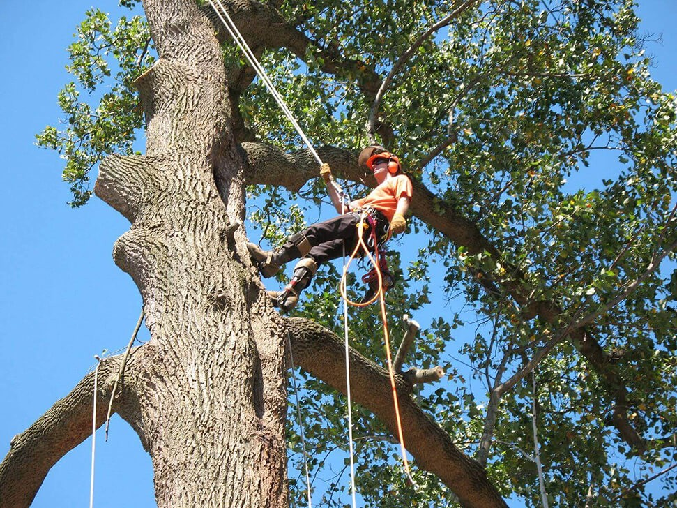 Commercial Tree Services copy-Boynton Beach Tree Trimming and Tree Removal Services-We Offer Tree Trimming Services, Tree Removal, Tree Pruning, Tree Cutting, Residential and Commercial Tree Trimming Services, Storm Damage, Emergency Tree Removal, Land Clearing, Tree Companies, Tree Care Service, Stump Grinding, and we're the Best Tree Trimming Company Near You Guaranteed!