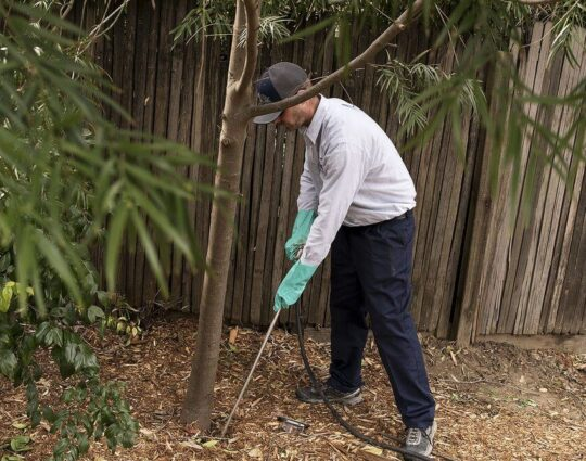Deep Root Injection-Boynton Beach Tree Trimming and Tree Removal Services-We Offer Tree Trimming Services, Tree Removal, Tree Pruning, Tree Cutting, Residential and Commercial Tree Trimming Services, Storm Damage, Emergency Tree Removal, Land Clearing, Tree Companies, Tree Care Service, Stump Grinding, and we're the Best Tree Trimming Company Near You Guaranteed!