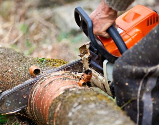 Emergency Tree Removal-Boynton Beach Tree Trimming and Tree Removal Services-We Offer Tree Trimming Services, Tree Removal, Tree Pruning, Tree Cutting, Residential and Commercial Tree Trimming Services, Storm Damage, Emergency Tree Removal, Land Clearing, Tree Companies, Tree Care Service, Stump Grinding, and we're the Best Tree Trimming Company Near You Guaranteed!