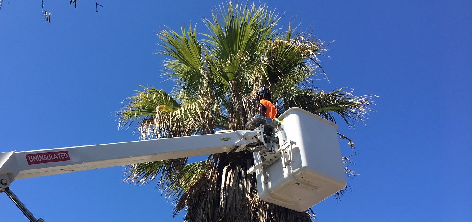 Palm Tree Removal-Boynton Beach Tree Trimming and Tree Removal Services-We Offer Tree Trimming Services, Tree Removal, Tree Pruning, Tree Cutting, Residential and Commercial Tree Trimming Services, Storm Damage, Emergency Tree Removal, Land Clearing, Tree Companies, Tree Care Service, Stump Grinding, and we're the Best Tree Trimming Company Near You Guaranteed!