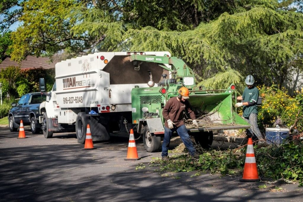 Residential Tree Services-Boynton Beach Tree Trimming and Tree Removal Services-We Offer Tree Trimming Services, Tree Removal, Tree Pruning, Tree Cutting, Residential and Commercial Tree Trimming Services, Storm Damage, Emergency Tree Removal, Land Clearing, Tree Companies, Tree Care Service, Stump Grinding, and we're the Best Tree Trimming Company Near You Guaranteed!
