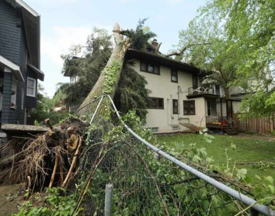 Storm Damage-Boynton Beach Tree Trimming and Tree Removal Services-We Offer Tree Trimming Services, Tree Removal, Tree Pruning, Tree Cutting, Residential and Commercial Tree Trimming Services, Storm Damage, Emergency Tree Removal, Land Clearing, Tree Companies, Tree Care Service, Stump Grinding, and we're the Best Tree Trimming Company Near You Guaranteed!