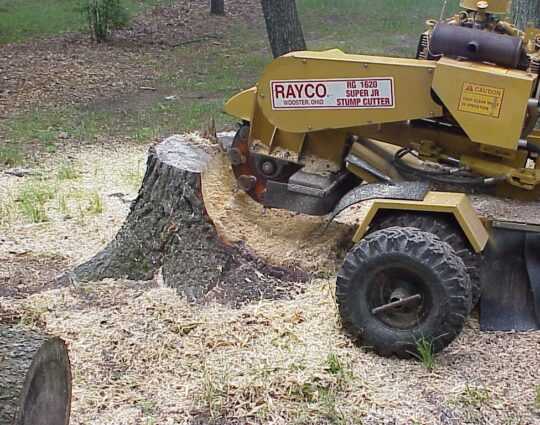 Stump Grinding & Removal-Boynton Beach Tree Trimming and Tree Removal Services-We Offer Tree Trimming Services, Tree Removal, Tree Pruning, Tree Cutting, Residential and Commercial Tree Trimming Services, Storm Damage, Emergency Tree Removal, Land Clearing, Tree Companies, Tree Care Service, Stump Grinding, and we're the Best Tree Trimming Company Near You Guaranteed!