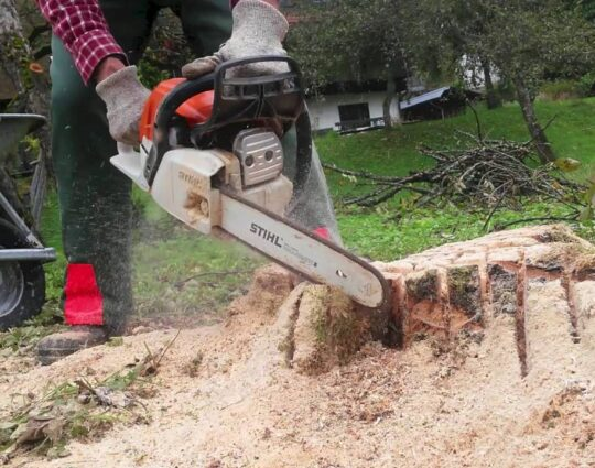 Stump Removal-Boynton Beach Tree Trimming and Tree Removal Services-We Offer Tree Trimming Services, Tree Removal, Tree Pruning, Tree Cutting, Residential and Commercial Tree Trimming Services, Storm Damage, Emergency Tree Removal, Land Clearing, Tree Companies, Tree Care Service, Stump Grinding, and we're the Best Tree Trimming Company Near You Guaranteed!