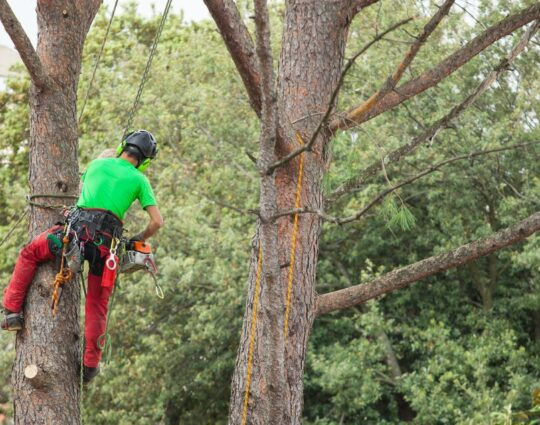 Tree Assessments-Boynton Beach Tree Trimming and Tree Removal Services-We Offer Tree Trimming Services, Tree Removal, Tree Pruning, Tree Cutting, Residential and Commercial Tree Trimming Services, Storm Damage, Emergency Tree Removal, Land Clearing, Tree Companies, Tree Care Service, Stump Grinding, and we're the Best Tree Trimming Company Near You Guaranteed!