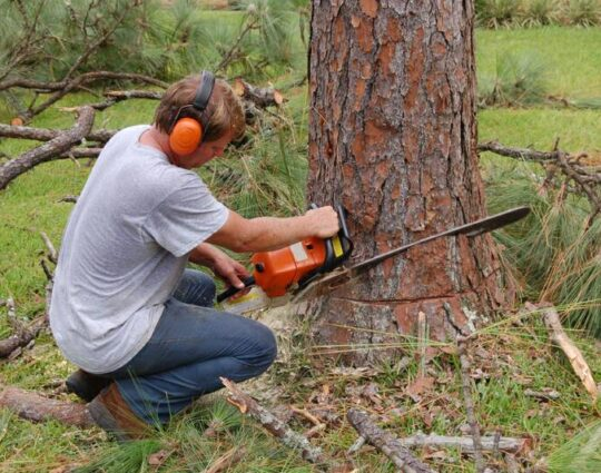 Tree Cutting-Boynton Beach Tree Trimming and Tree Removal Services-We Offer Tree Trimming Services, Tree Removal, Tree Pruning, Tree Cutting, Residential and Commercial Tree Trimming Services, Storm Damage, Emergency Tree Removal, Land Clearing, Tree Companies, Tree Care Service, Stump Grinding, and we're the Best Tree Trimming Company Near You Guaranteed!