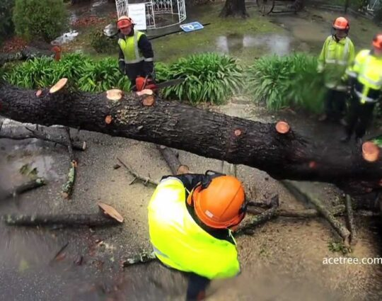 Tree Doctor-Boynton Beach Tree Trimming and Tree Removal Services-We Offer Tree Trimming Services, Tree Removal, Tree Pruning, Tree Cutting, Residential and Commercial Tree Trimming Services, Storm Damage, Emergency Tree Removal, Land Clearing, Tree Companies, Tree Care Service, Stump Grinding, and we're the Best Tree Trimming Company Near You Guaranteed!