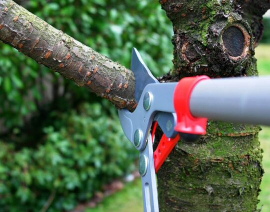 Tree Pruning-Boynton Beach Tree Trimming and Tree Removal Services-We Offer Tree Trimming Services, Tree Removal, Tree Pruning, Tree Cutting, Residential and Commercial Tree Trimming Services, Storm Damage, Emergency Tree Removal, Land Clearing, Tree Companies, Tree Care Service, Stump Grinding, and we're the Best Tree Trimming Company Near You Guaranteed!