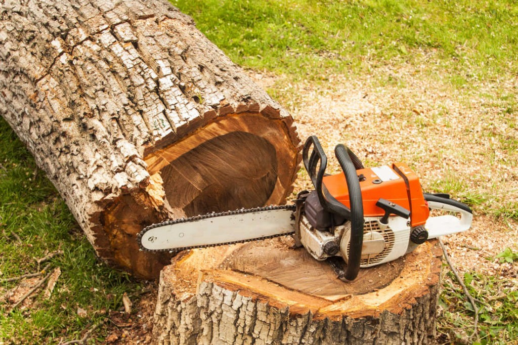 Tree Removal-Boynton Beach Tree Trimming and Tree Removal Services-We Offer Tree Trimming Services, Tree Removal, Tree Pruning, Tree Cutting, Residential and Commercial Tree Trimming Services, Storm Damage, Emergency Tree Removal, Land Clearing, Tree Companies, Tree Care Service, Stump Grinding, and we're the Best Tree Trimming Company Near You Guaranteed!