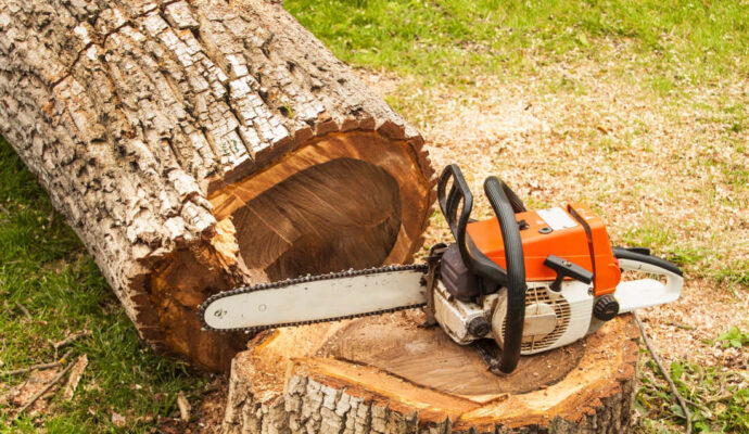 Tree Pruning & Tree Removal-Boynton Beach Tree Trimming and Tree Removal Services-We Offer Tree Trimming Services, Tree Removal, Tree Pruning, Tree Cutting, Residential and Commercial Tree Trimming Services, Storm Damage, Emergency Tree Removal, Land Clearing, Tree Companies, Tree Care Service, Stump Grinding, and we're the Best Tree Trimming Company Near You Guaranteed!