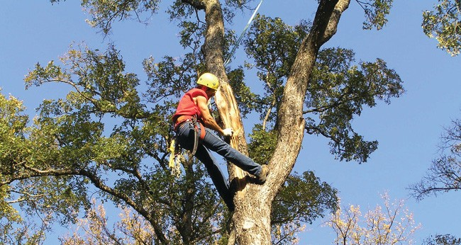Tree Trimming-Boynton Beach Tree Trimming and Tree Removal Services-We Offer Tree Trimming Services, Tree Removal, Tree Pruning, Tree Cutting, Residential and Commercial Tree Trimming Services, Storm Damage, Emergency Tree Removal, Land Clearing, Tree Companies, Tree Care Service, Stump Grinding, and we're the Best Tree Trimming Company Near You Guaranteed!